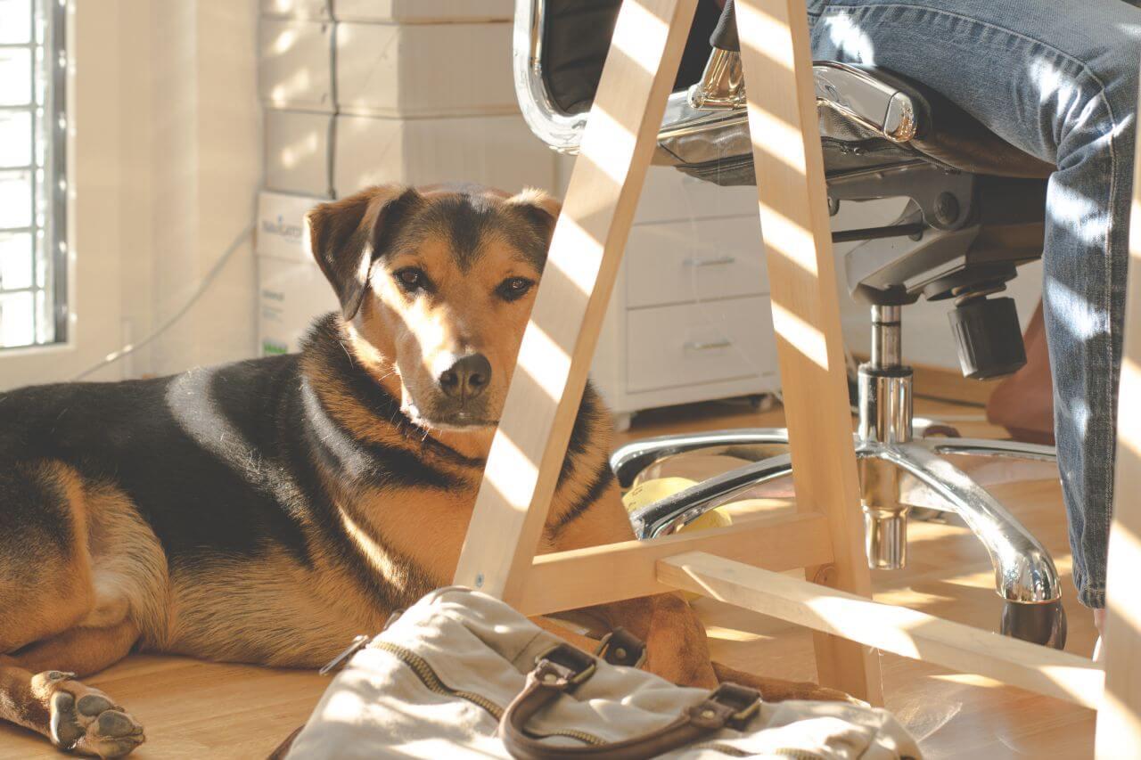 """Free photo """"Animal"""" by  Lum3n.com"""