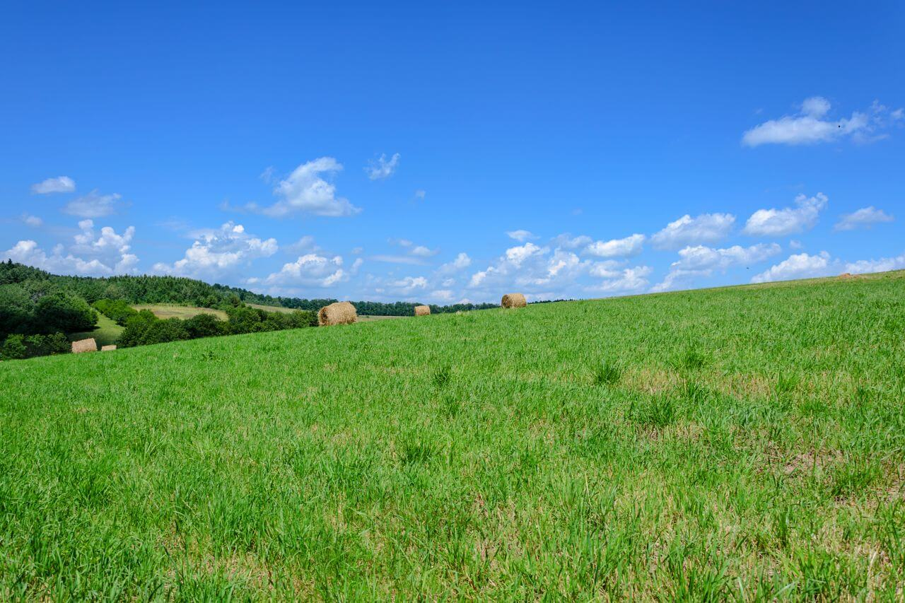 """Free photo """"Agriculture"""" by  Photo Mix"""