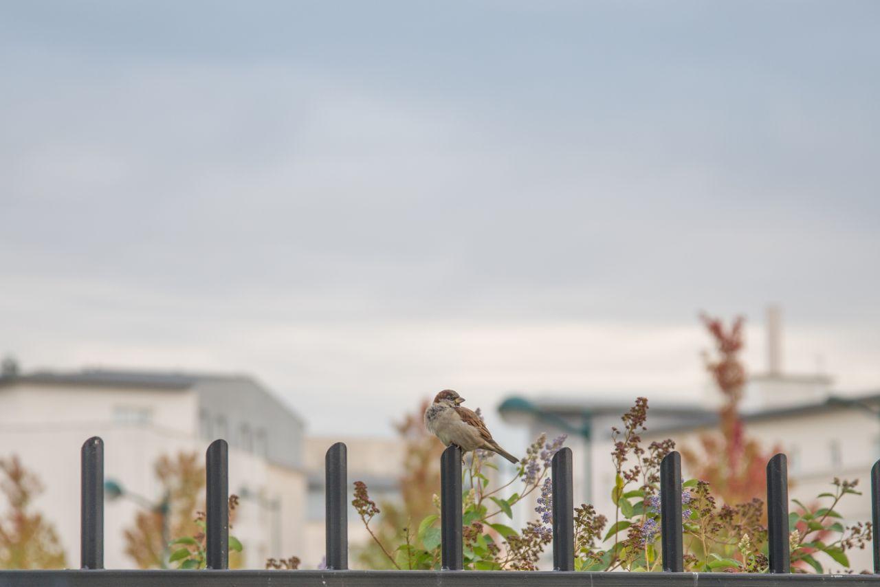 """Free photo """"Sparrow"""""""