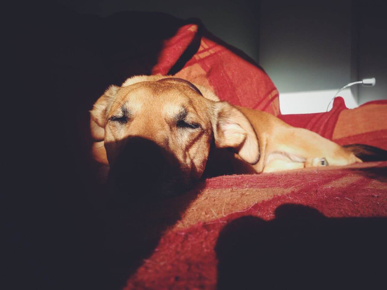 "Free photo ""Puppy Dog Sleeping Shadow"" by Snapwire"