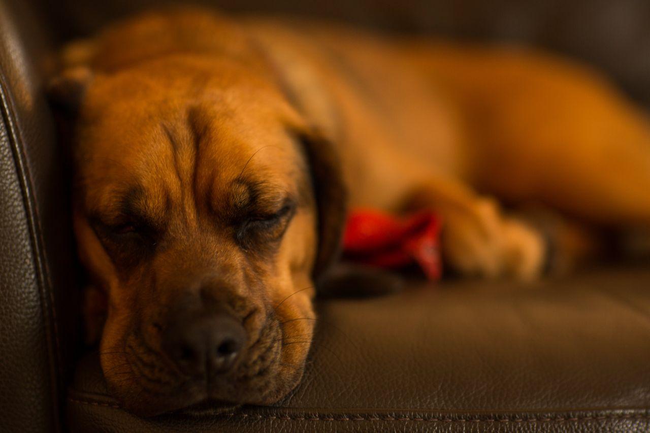 "Free photo ""Sleeping Dog"" by Torsten Dettlaff"