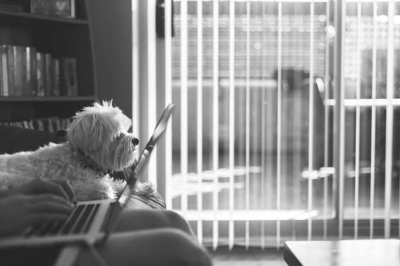 "Free photo ""Laptop Terrier Dog"" by Nick Turner"