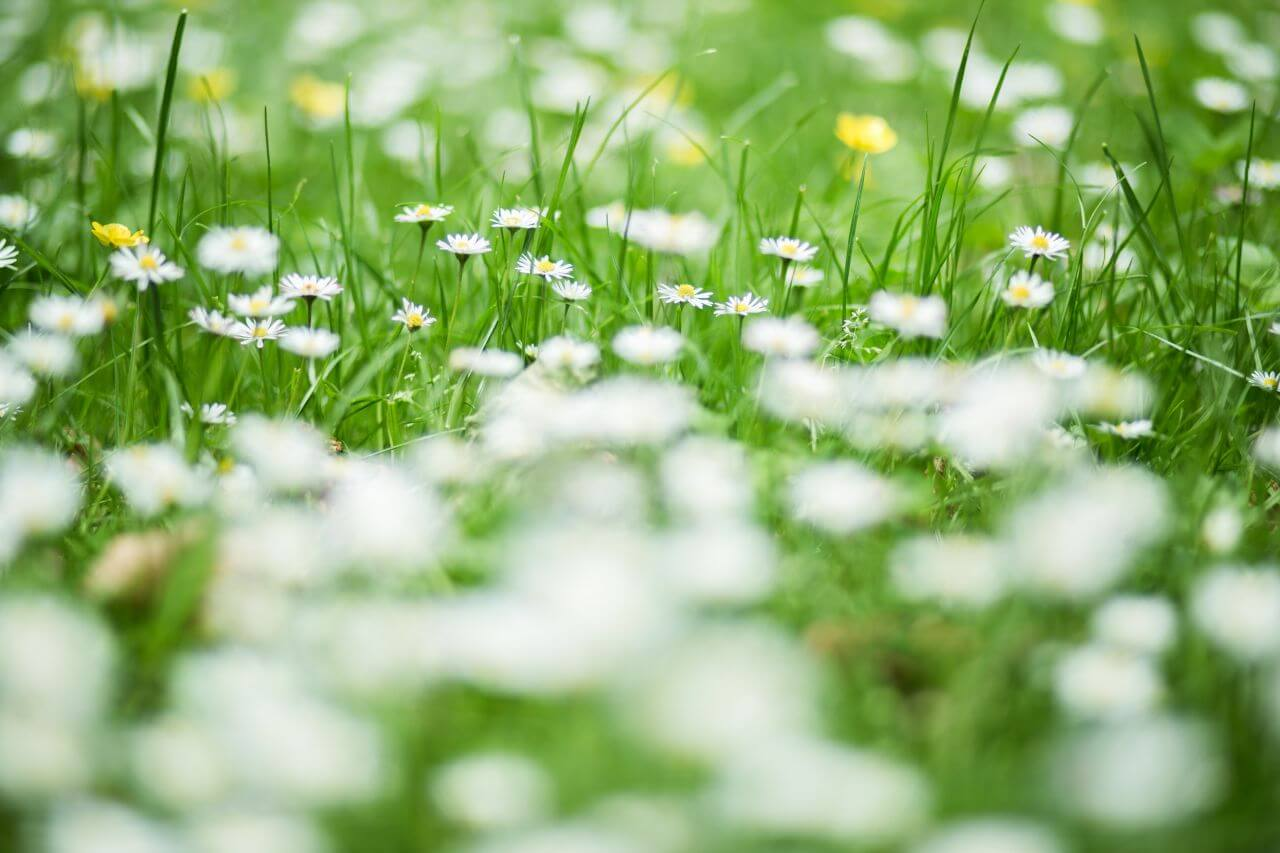"Free photo ""Grass and Daisies at the Park"" by NegativeSpace"
