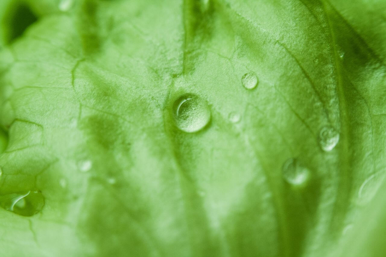 """Free photo """"Green Leaf Morning Dew"""" by NegativeSpace"""