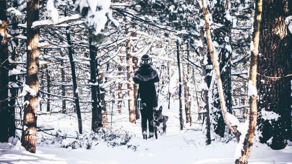 Winter Daze photo