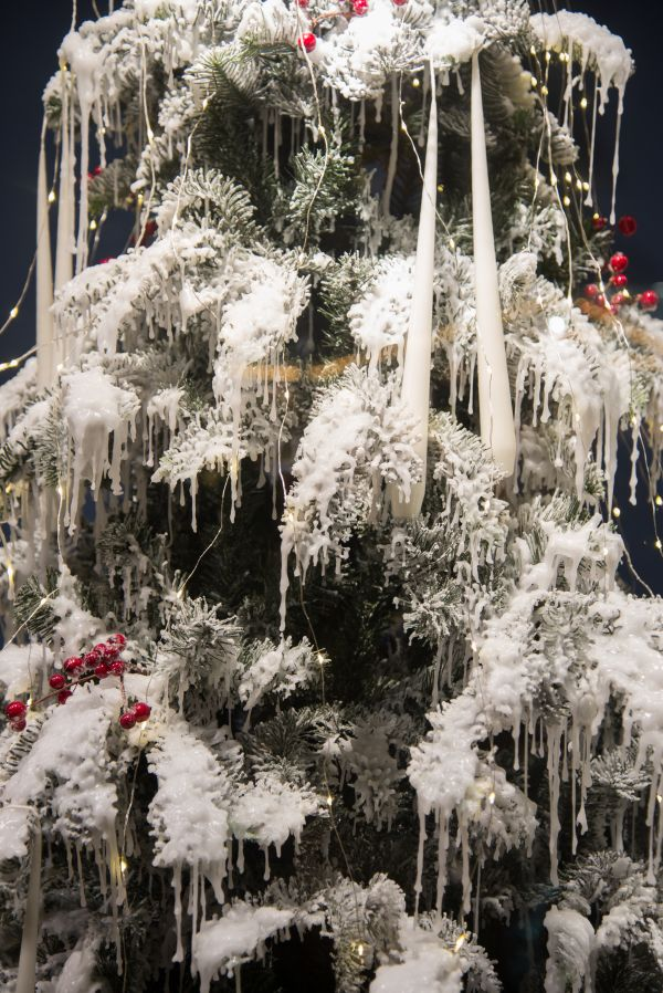 Christmas tree with snow photo