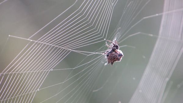 Nature  spider  weaver video