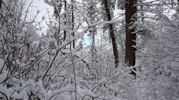 Okanagan  winter wonderland  snow video