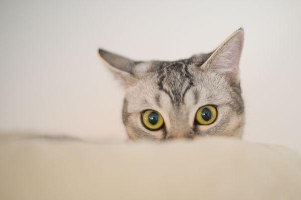 Im watching you to photo