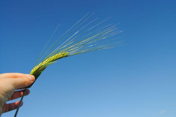 Holding a grain photo