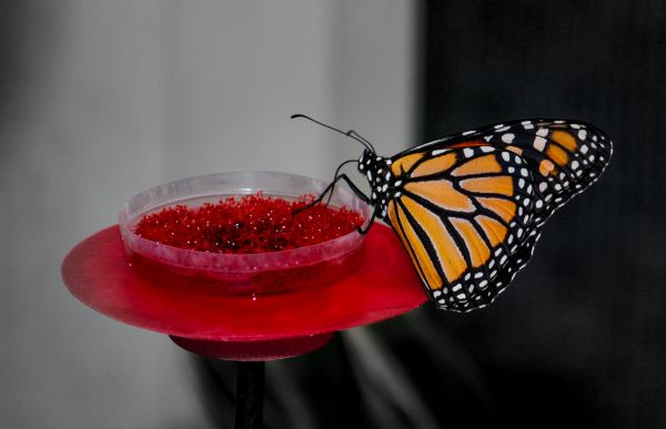 Butterfly enjoying a meal photo