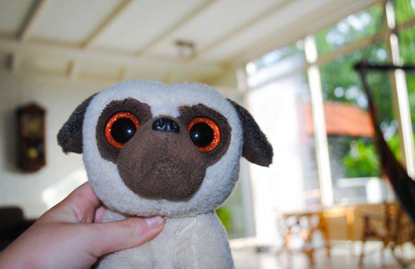 Saddy the stuffed dog photo