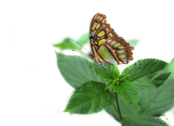 Butterfly sitting on a leaf photo