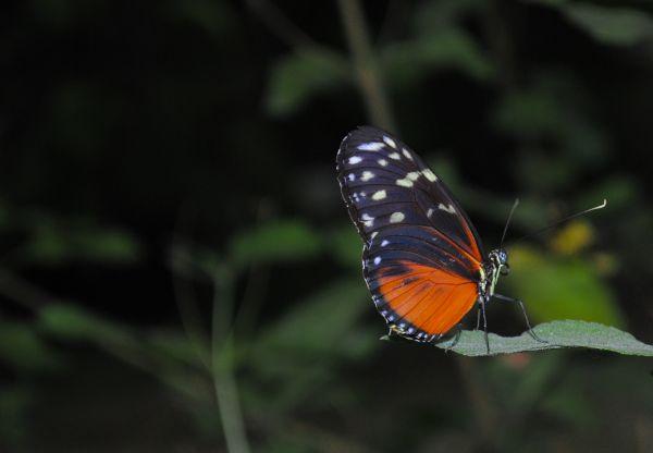 Orange butterfly sitting on a leaf photo