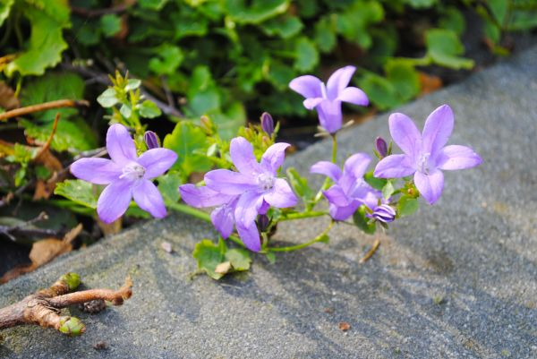 Little purple flowers photo