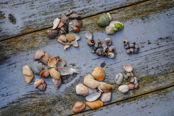 Shells in groups photo