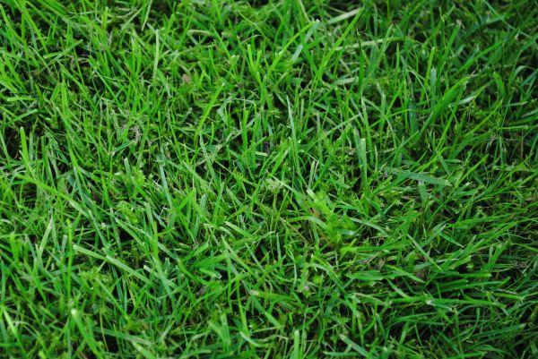 grass wallpaper photo