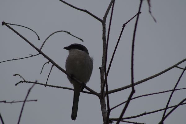 Winter Bird photo