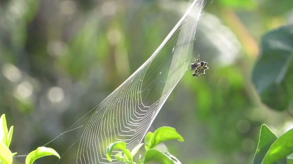 Spider  insect  nature video