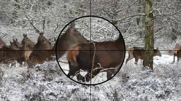 Hunting  hunter  hunt video