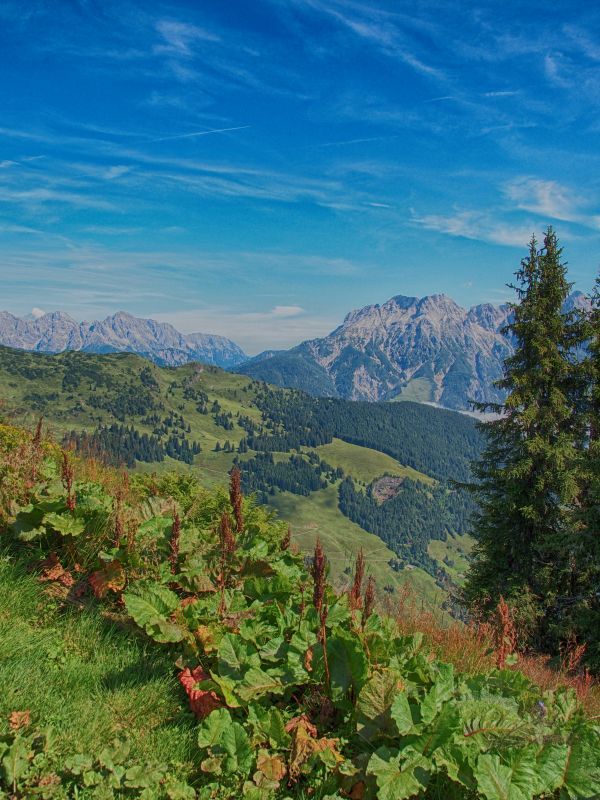 Austrian Mountains in Summer photo