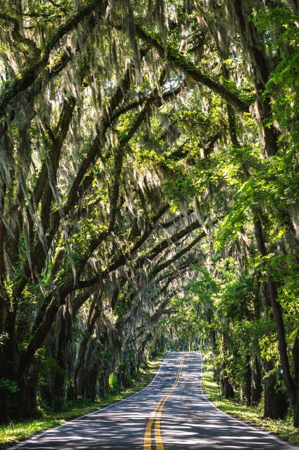 Tallahassee photo