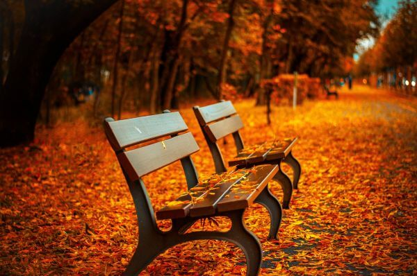 Autumn Park Bench Fall Orange Leave Trail photo