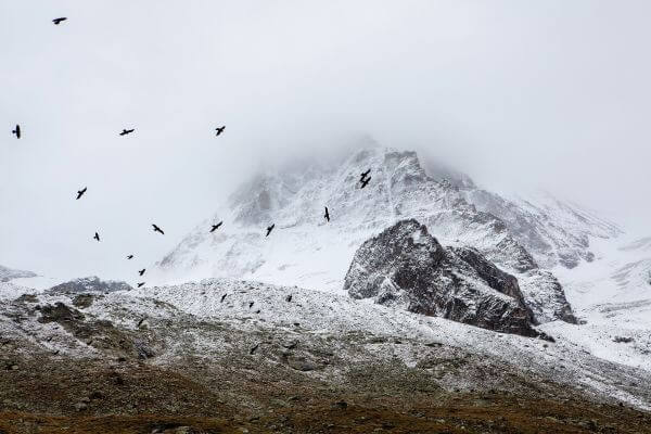 Mountains Snow Birds White Black Grey Fog photo