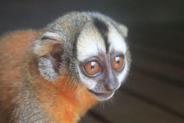 Curious little monkey  photo
