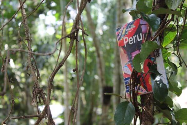 Lonely planet in the jungle photo