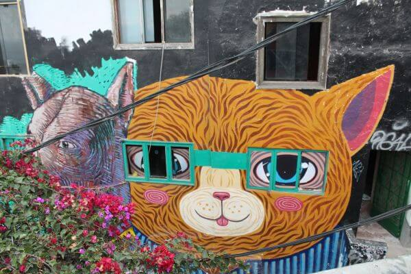 Cat with the window glasses  photo