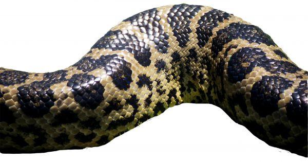 snakeskin photo