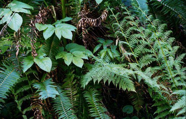 forest closeup photo