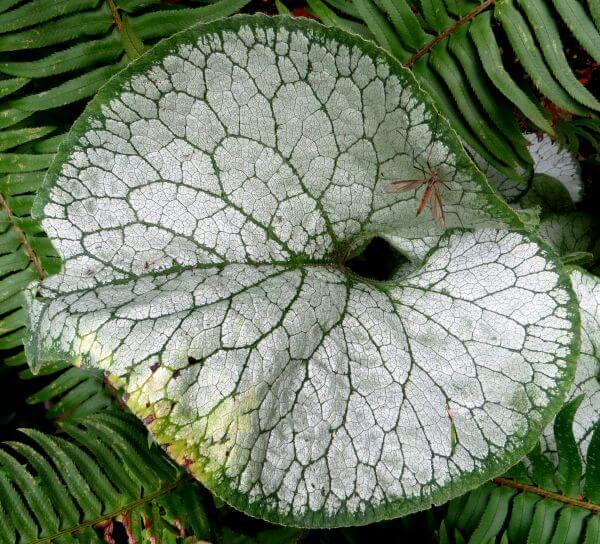 green-and-white leaf photo