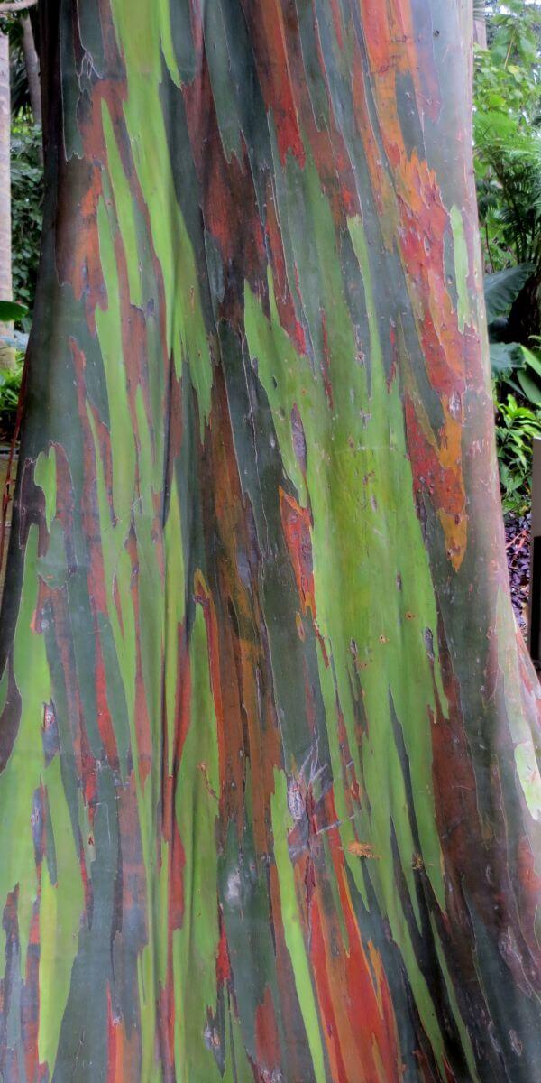 rainbow tree photo