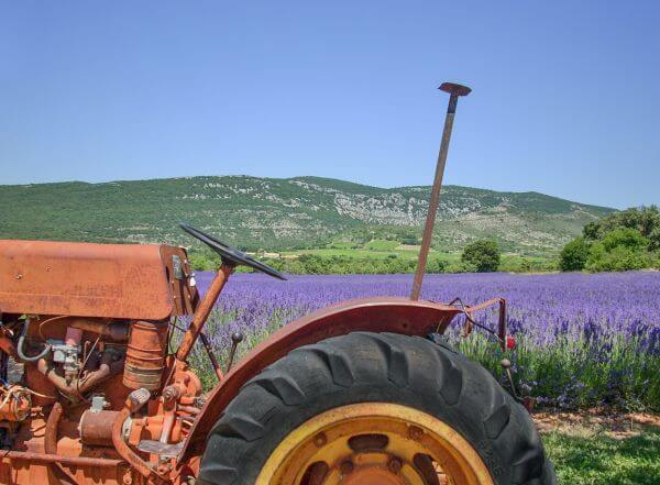 Tractor in lavender field photo