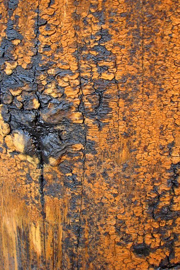 gray and orange bark photo