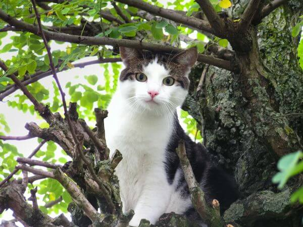 Cat in tree photo