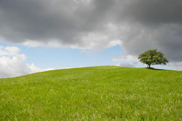 Solitary tree photo