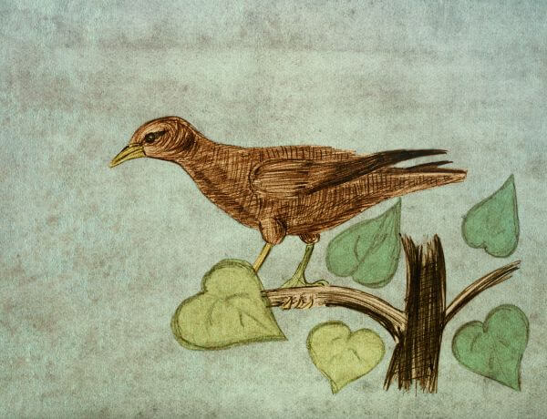 Hangbird. Bird on a branch. Pencil sketch on the old paper. photo