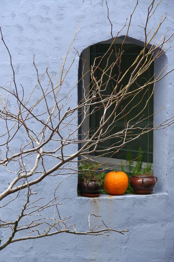 blue wall with window and tree photo