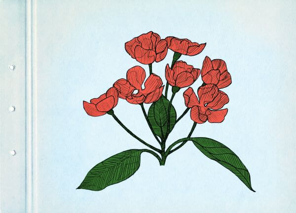 Red spring flowers. Drawing on blue cardboard. Vintage picture. photo