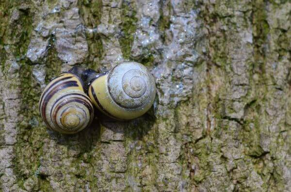 Snails in love photo