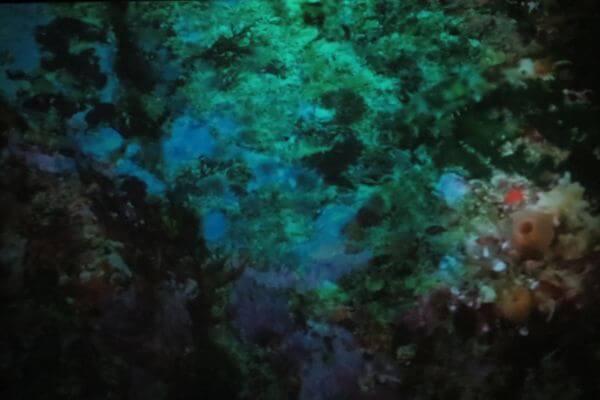underwater texture photo