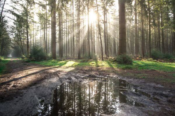 Sunny morning in the forest photo