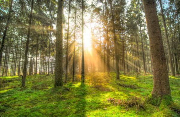 Rays of sun photo