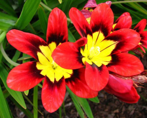 red-and-yellow flowers photo