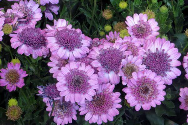 pink-violet flowers photo