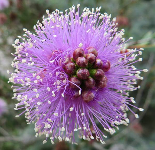 purple-and-white flower 3 photo