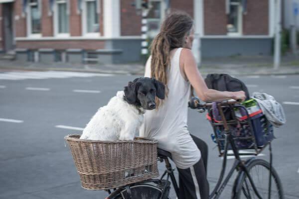 Dutch way to travel photo